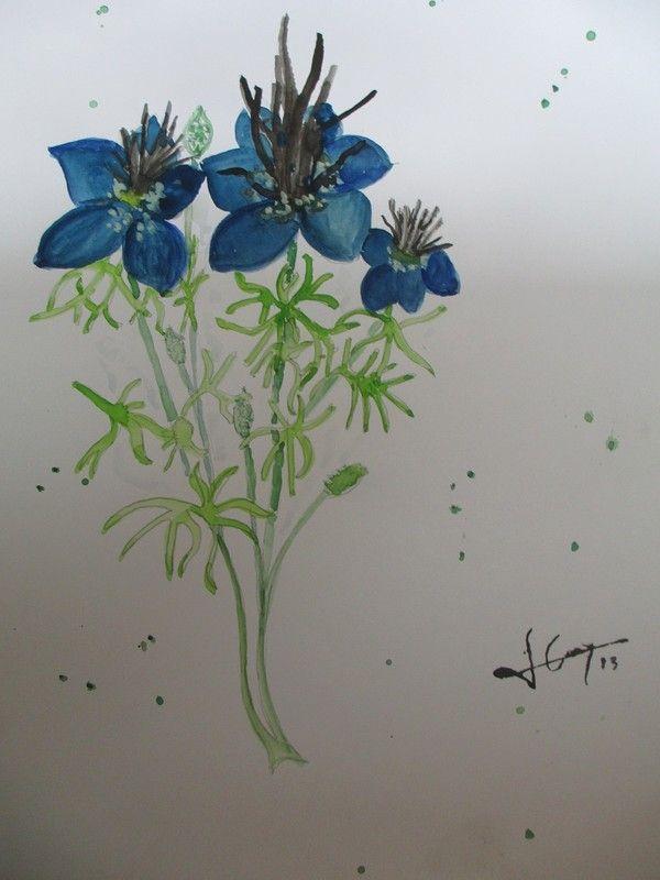 Nigelle d 39 espagne peinte sur moyenne feuille a l 39 aquarelle for Plante nigelle